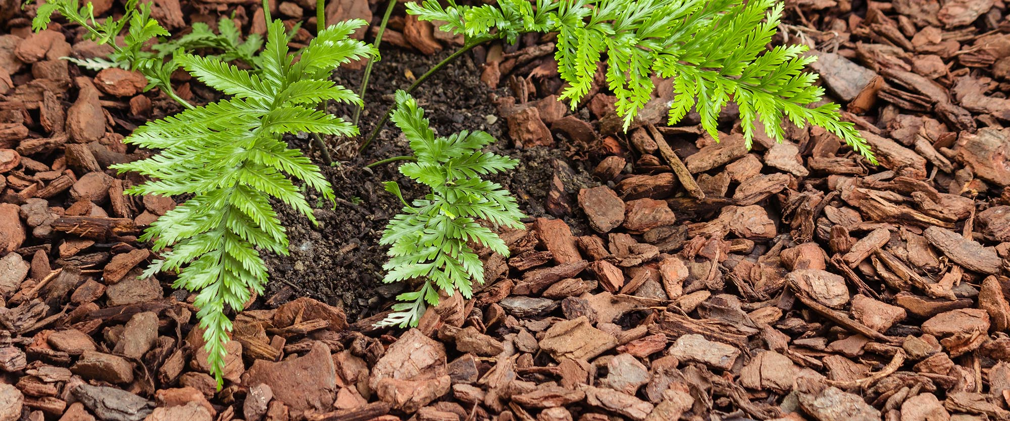 Browse Our Full Selection of Mulch, Sand and Gravel